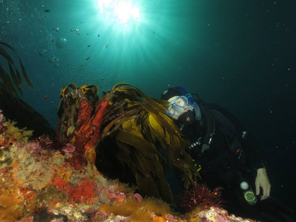 Backlit-diver-and-kelp