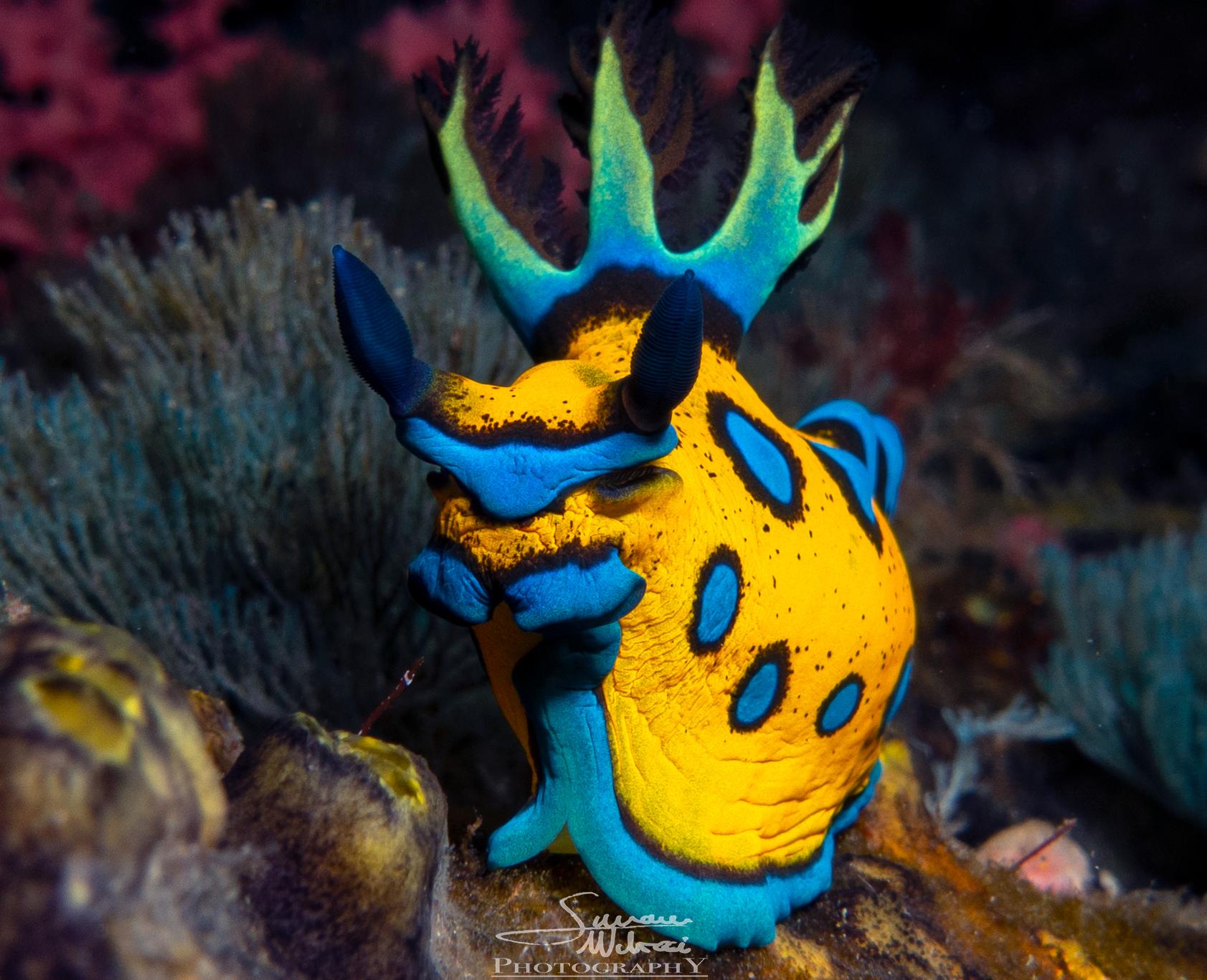 Awesome Fishlife - Dive! Tutukaka